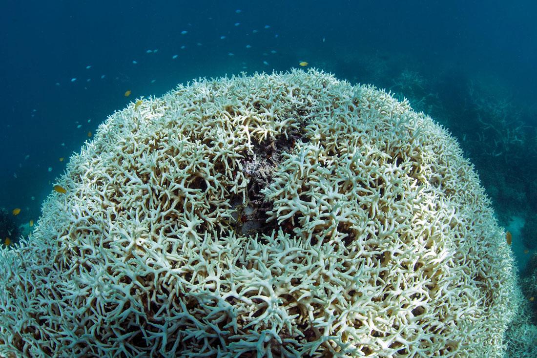 Мёртвый коралловый риф