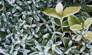 Заморозки в Курганской области