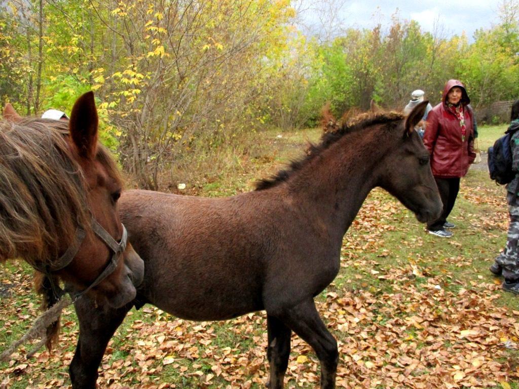 И даже лошади
