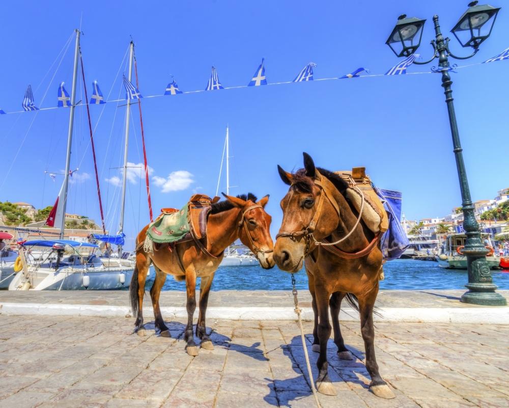 Греческие ослы под защитой