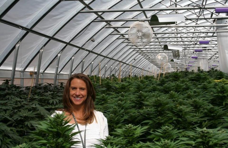 «Растанада»: в чём опасность легализации марихуаны в Канаде для России?