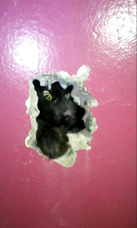 спасли котенка замурованного в стену