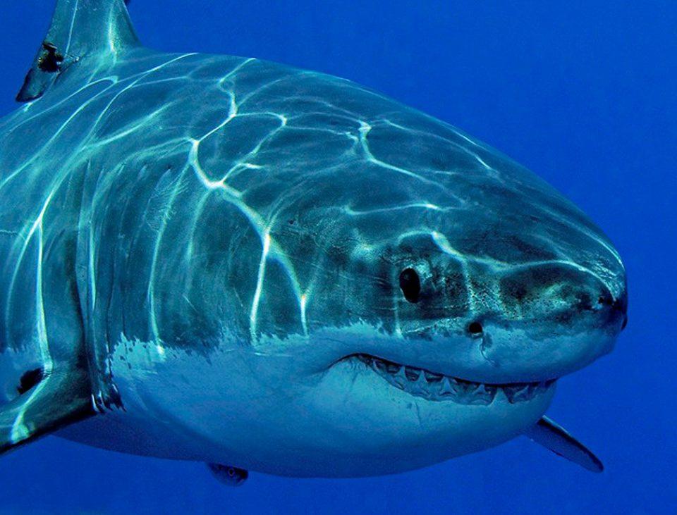 на мужчину напала акула.