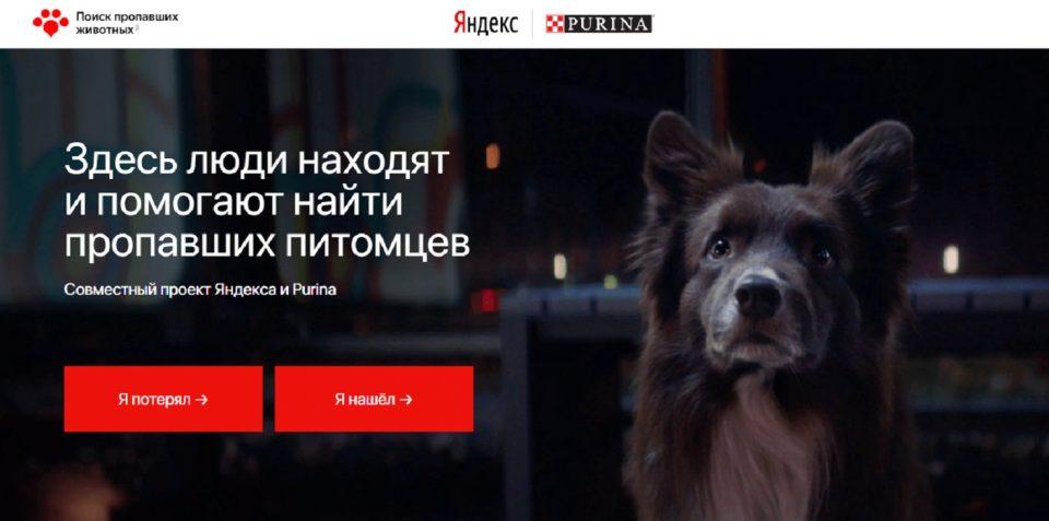 Сервис Петфайндер по поиску домашних животных запущен в Перми