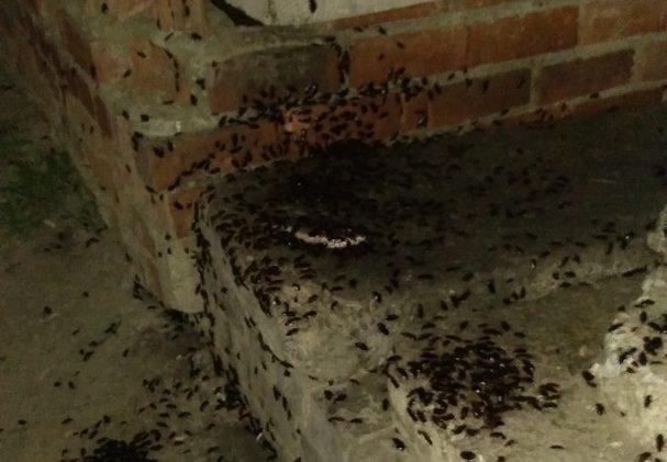В Каменске-Уральском нашествие тараканов