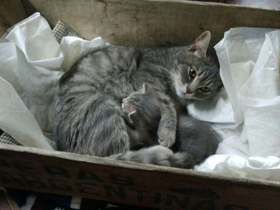дачная кошка