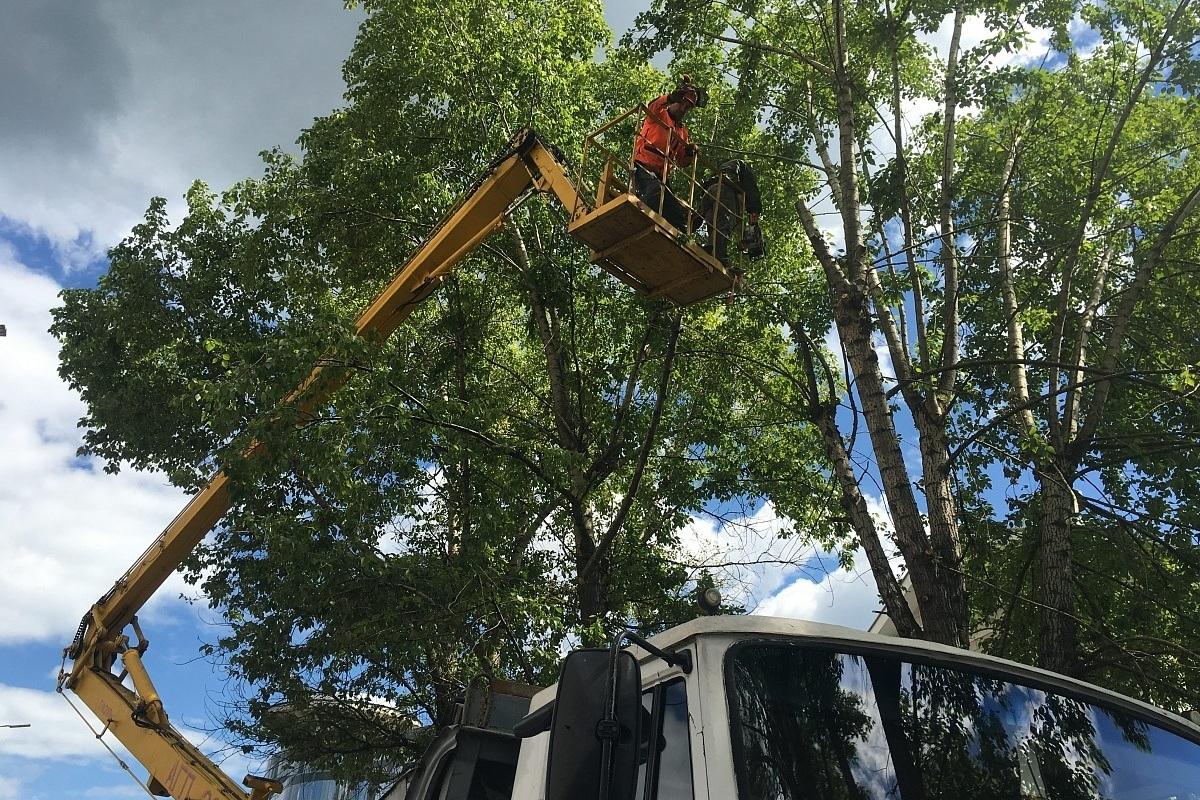 Коммунальщики кронируют и спилят более 20 деревьев в Красногорском районе