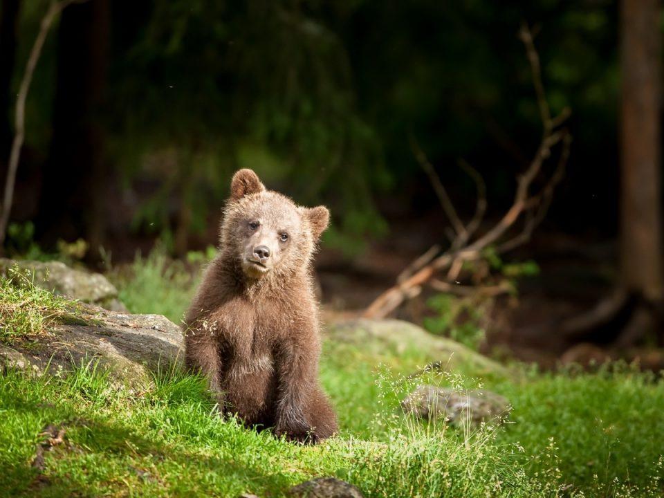 Медведь в Каменске-Уральском - не вымысел
