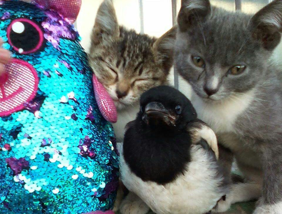 День соседей: как коты сороку любили