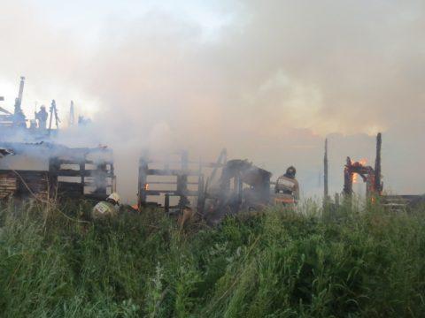 Собака спасла семью из пожара в Каменске-Уральском (фото)