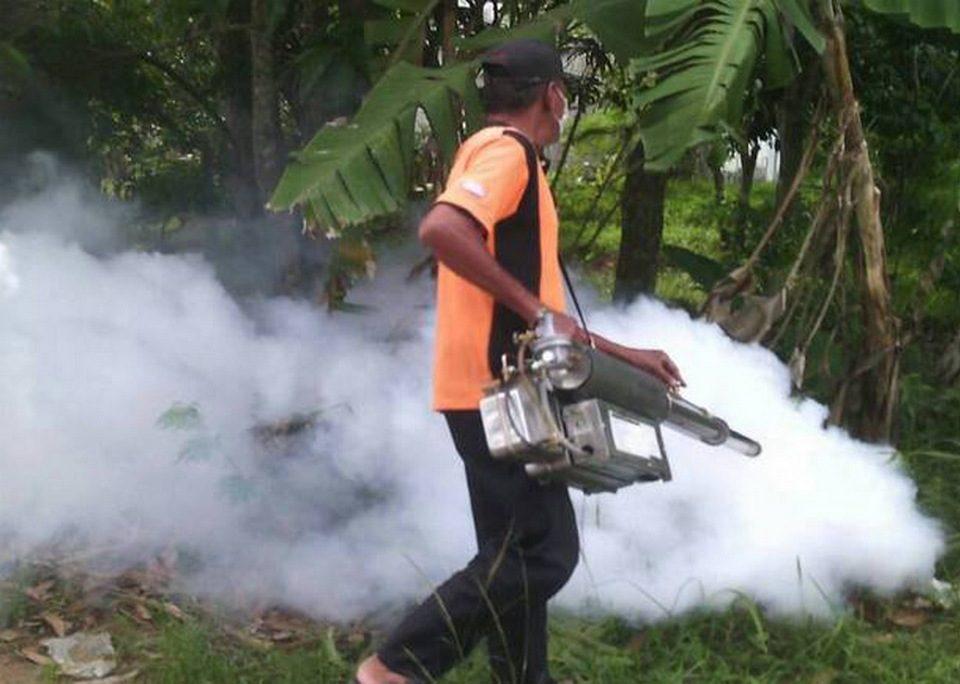 Эпидемия лихорадки Денге в Таиланде
