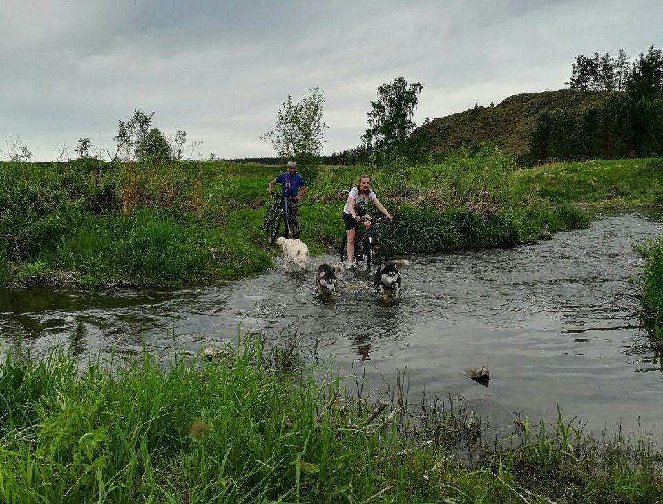 Соревнования по ездовому спорту на собаках пройдут в Каменском районе