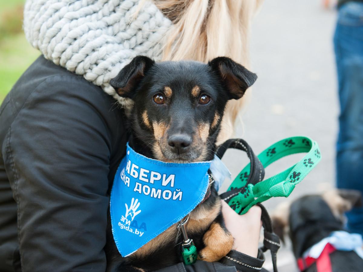 Выставка-раздача кошек и собак пройдет в воскресенье в библиотеке имени Пушкина