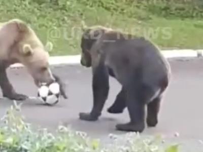 На Камчатке медведи играют в футбол на общественной территории (видео)