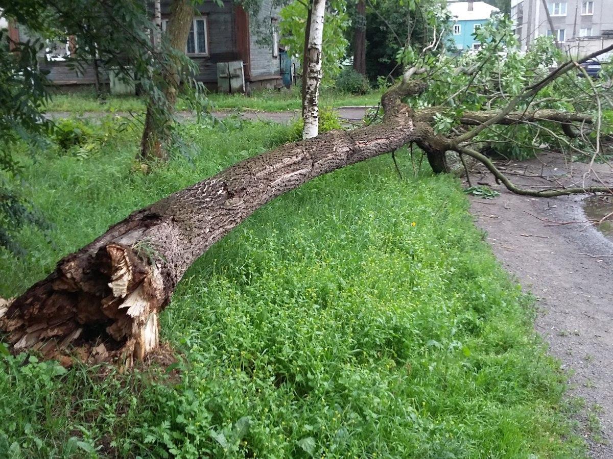 В Москве рухнувшее от ветра дерево убило ребенка (видео)
