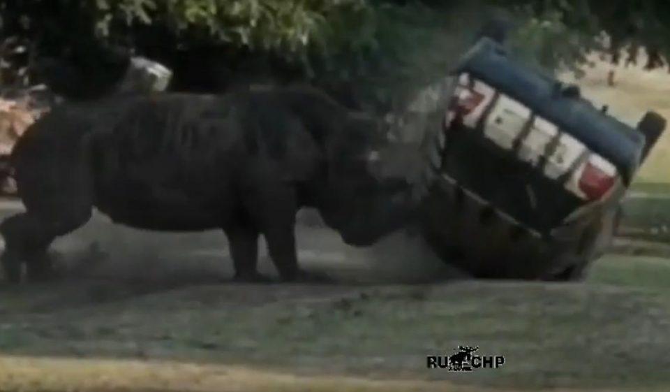 Носорог разбушевался в сафари-парке, смотритель не пострадал