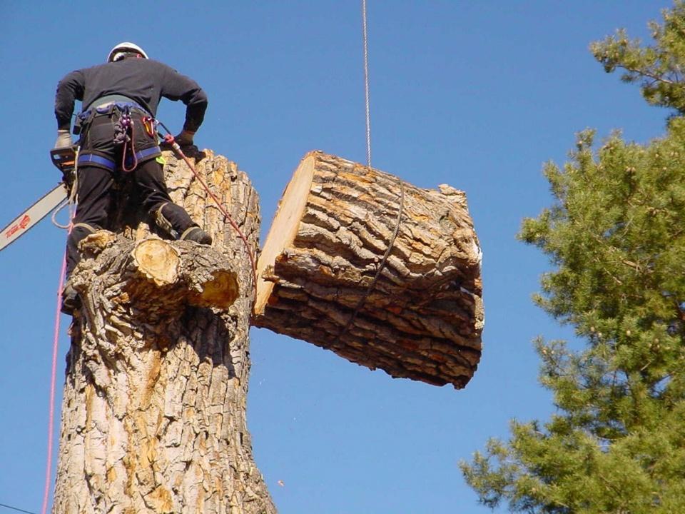 Более 160 деревьев ликвидировано во дворах Каменска-Уральского