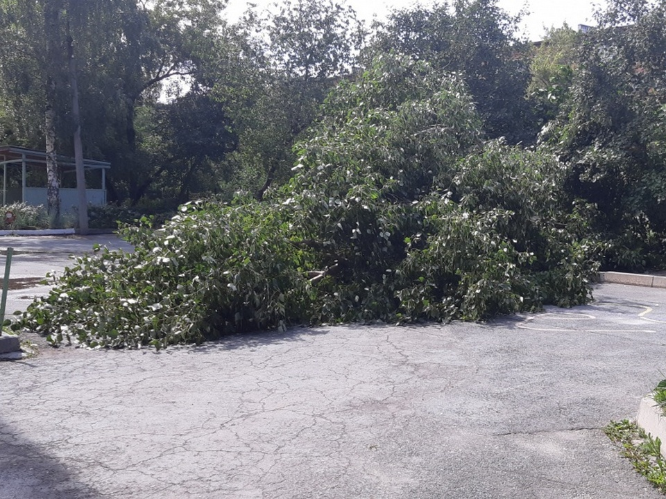 Сильный ветер в Екатеринбурге крушит заборы и деревья