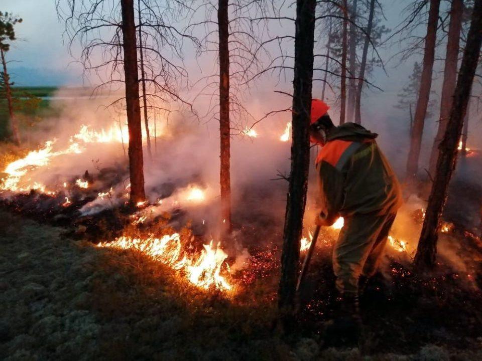 Лесные пожары в Сибири устраивают специально?