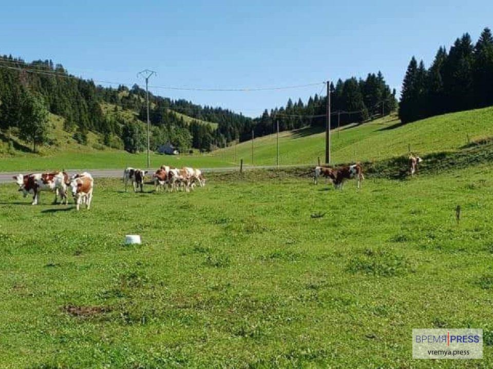 Фермерские хозяйства Франции субсидируются государством более чем на 50 %