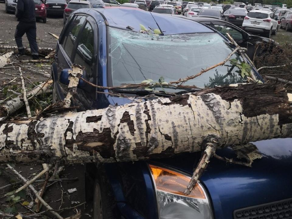 Сильный ветер в Каменске-Уральском массово валит деревья на машины
