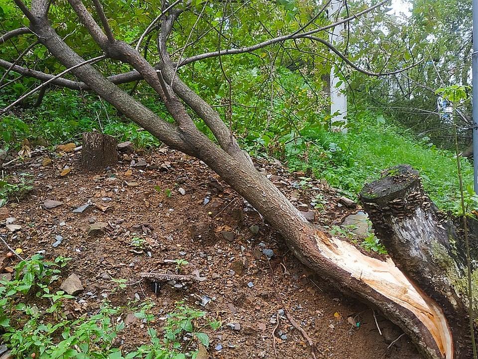 Двое взрослых и ребенок пострадали в Москве при падении деревьев