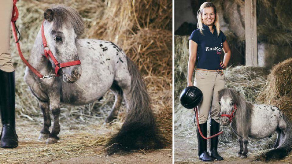 Самый маленький конь в мире обнаружен в Польше