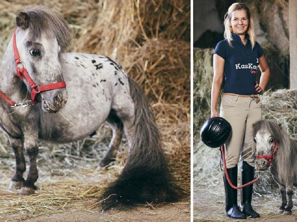 Самый маленький в мире конь обнаружен в Польше
