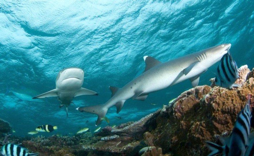 Посетители бельгийского зоопарка засняли на видео, как одна акула съела другую