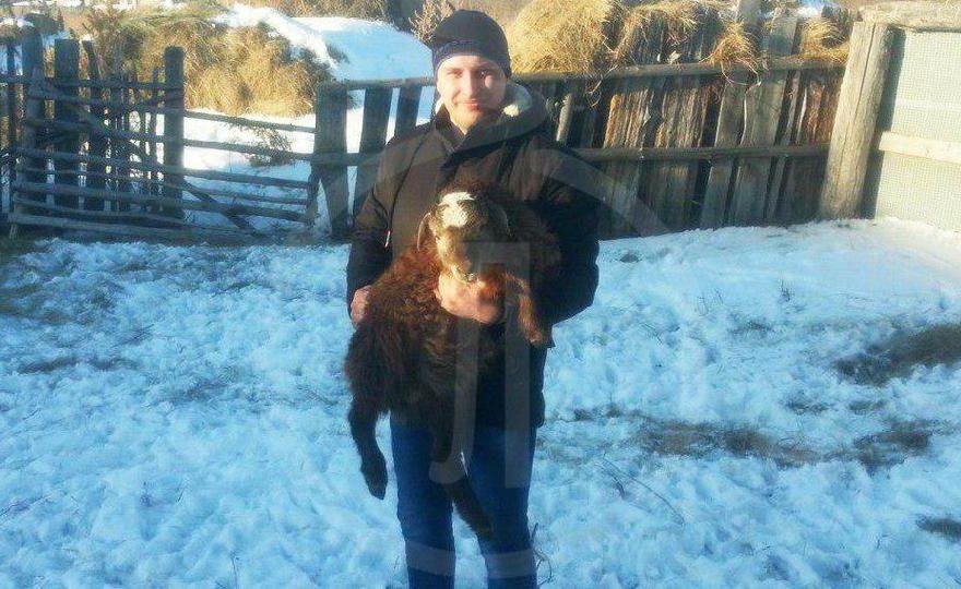 22-летний парень из Каменского района распродает стадо баранов для лечения матери