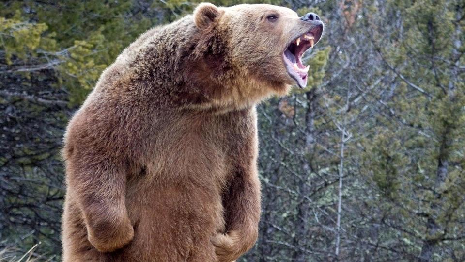 В Забайкалье медведь загрыз 50-летнюю женщину