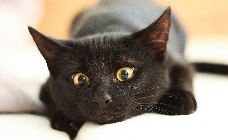 В Екатеринбурге приюты перестанут отдавать черных кошек из-за Хэллоуина