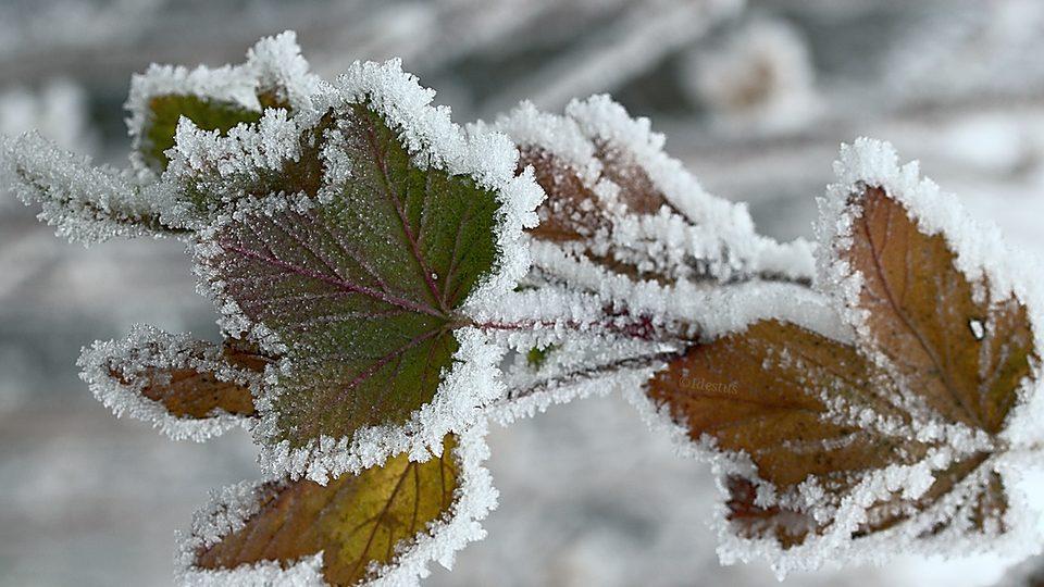 Гидрометцентр назвал регионы РФ, где ноябрь будет теплее обычного