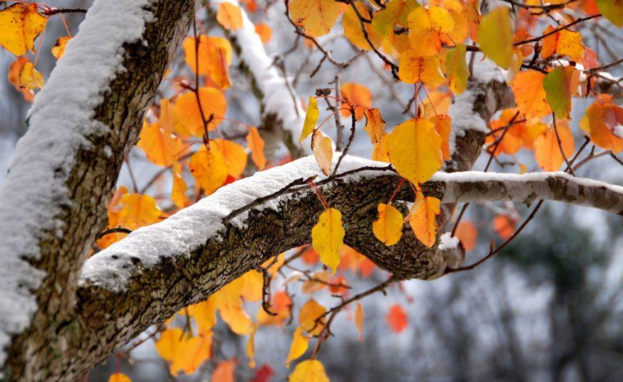 Снег на Урале придет к концу недели