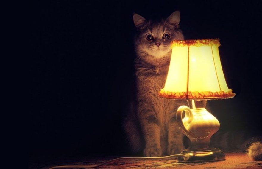 Часть Синарского района осталась без электричества из-за крысы