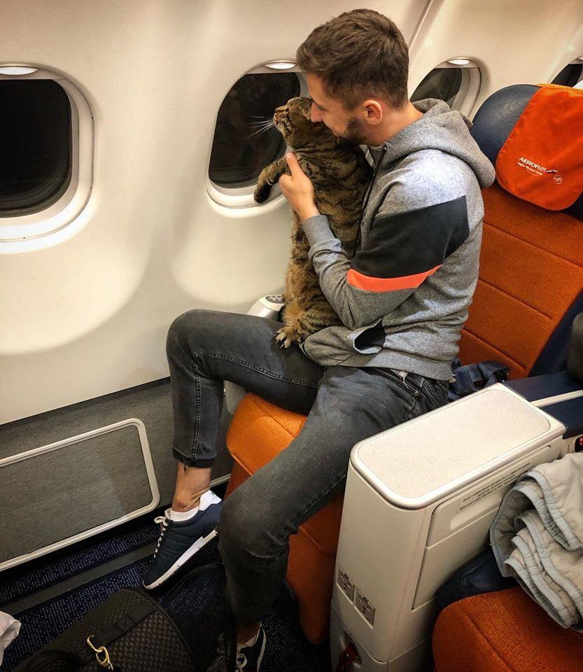 Жителю Владивостока пришлось искать дублера своему растолстевшему коту, чтобы попасть в самолет