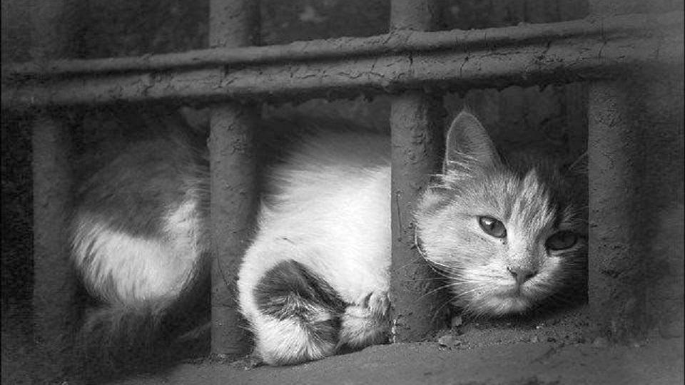 Под Каменском-Уральским кота облили кипятком и выкинули на мороз