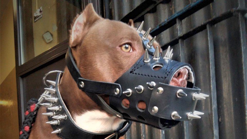 Минюст предложил штрафовать за выгул опасных собак без намордников