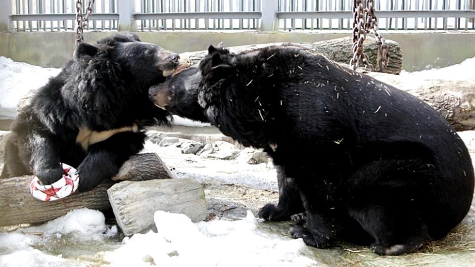 В Екатеринбургском зоопарке проснулись медведи