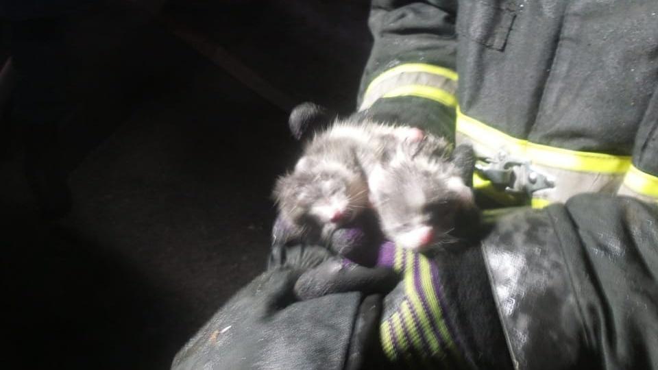 спасли двух котят