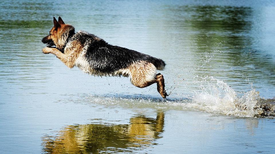 Сотрудники МЧС Сергиева Посада спасли собаку из ледяной воды