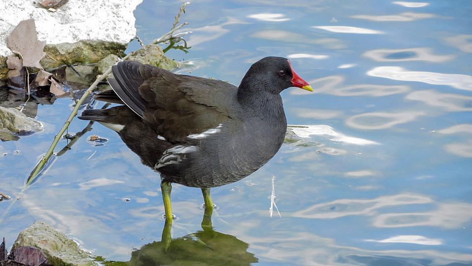 Природа очистилась: краснокнижные птицы замечены в Москве