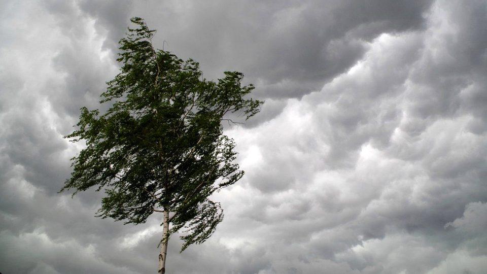 МЧС предупредило о дождях и сильном ветре 22 мая