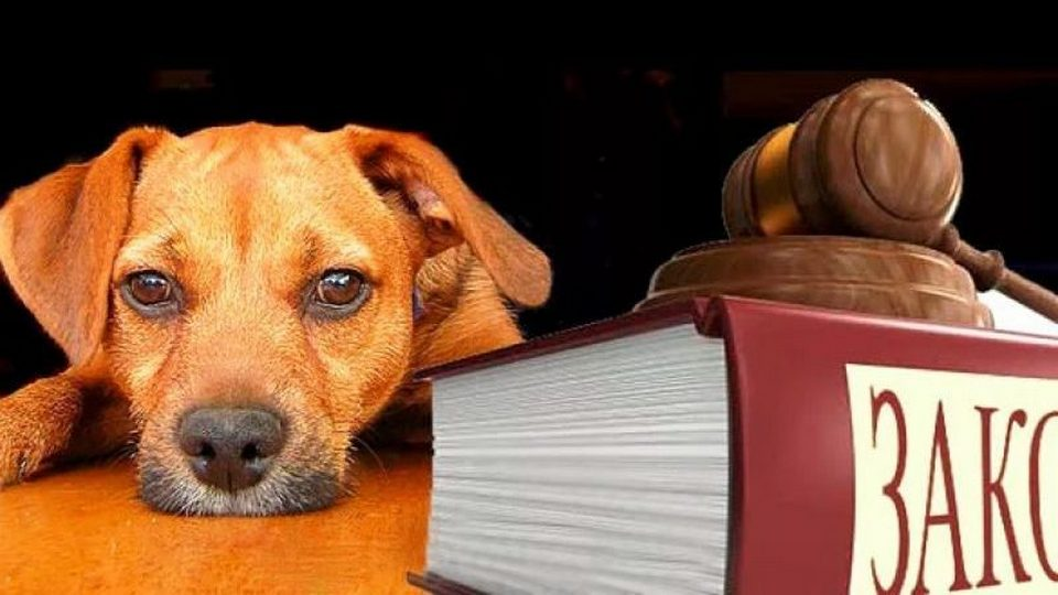 Природоохранная прокуратура разъясняет закон об обращении с животными
