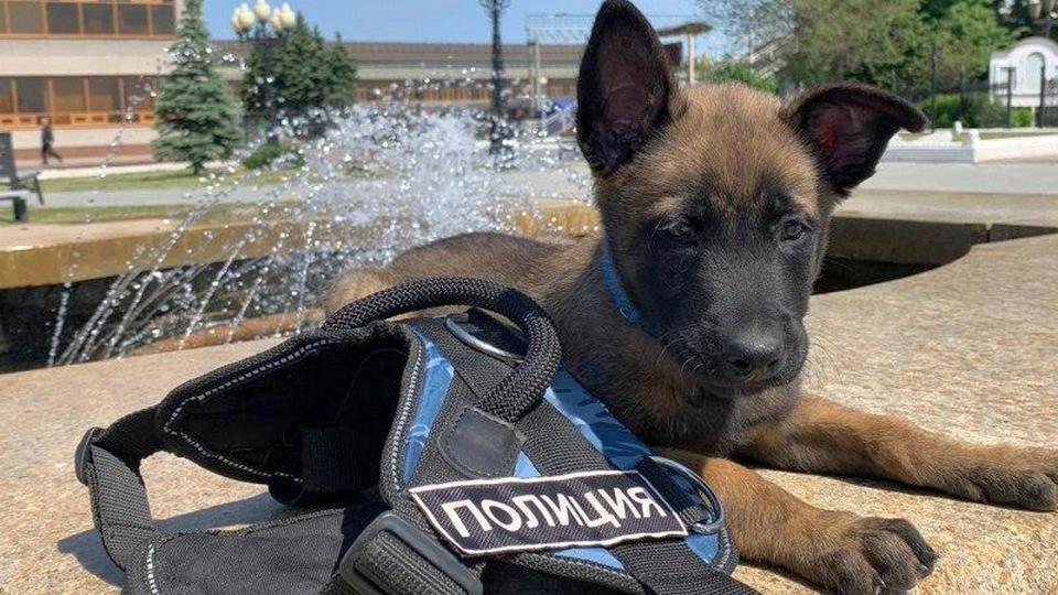 На службу транспортной полиции Урала заступят пять щенков