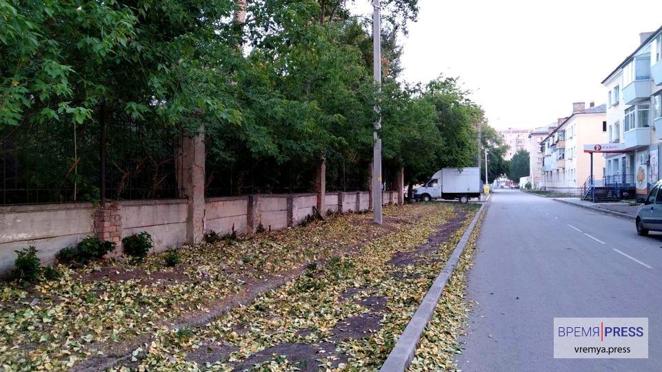 В Каменске-Уральском из-за аномальной жары деревья сбрасывают листву
