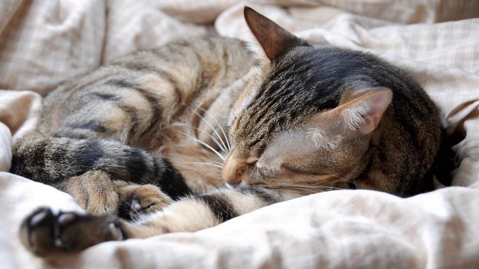 Госдуме предложили запретить удалять животным когти и делать другие подобные операции
