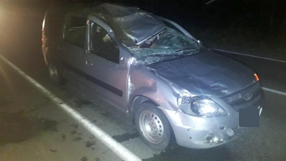 Три человека пострадали в ДТП с лосём в Свердловской области