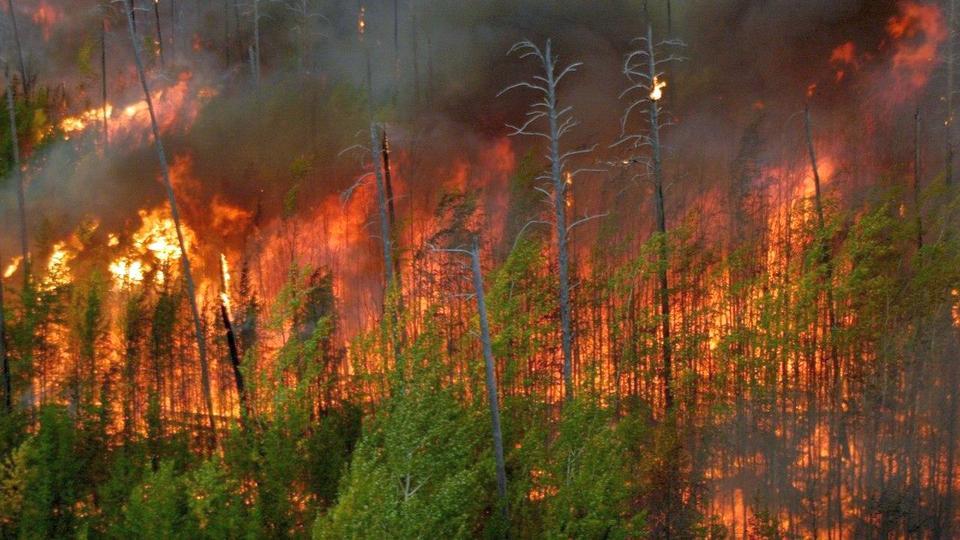 Режим ЧС ввели в Миассе из-за лесных пожаров, устроенных туристами
