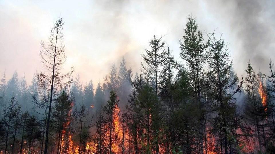 Власти Забайкалья начали вызывать искусственные дожди для тушения лесных пожаров